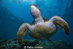 Love turtles! Who doesn't? by Fabio Ludmer